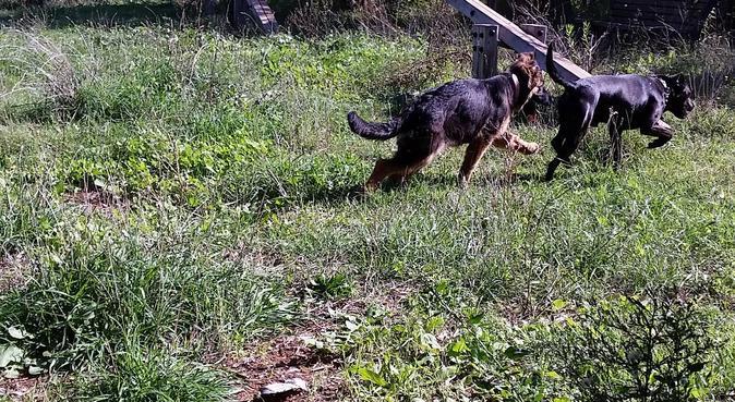 Passeggiate al parco, in spiaggia e divertimento!, dog sitter a Roma