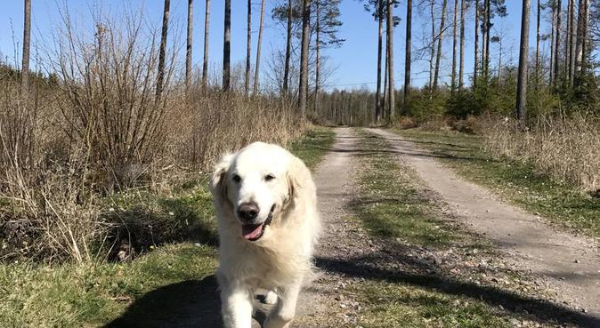 Rutinerad och kärleksfull hundpassning, hundvakt nära Bandhagen