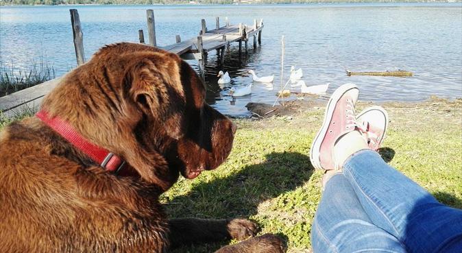 Passeggiate e divertimento per i vostri cani., dog sitter a Rocca di Papa
