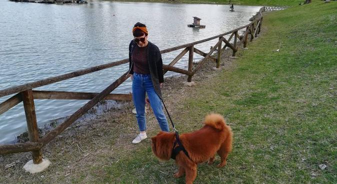 Tante allegre passeggiate!, dog sitter a Bologna