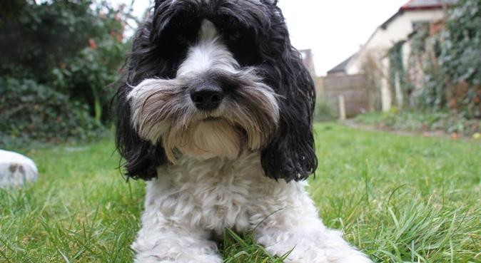 Buckhurst Hill dog sitter, dog sitter in Buckhurst Hill