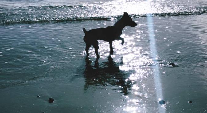 Plein d'amour à revendre! 🐶, dog sitter à Montpellier