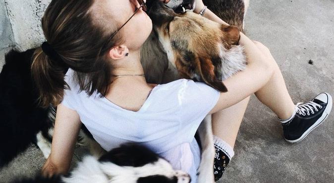 Passeggiate e tanto amore per i vostri cani 🐶, dog sitter a Ceparana, La Spezia