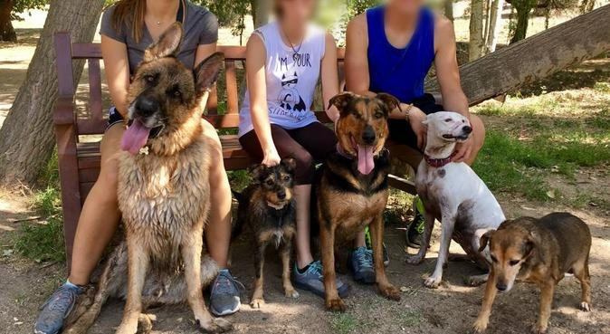 Estudiante de veterinaria con experiencia, canguro en Madrid, España