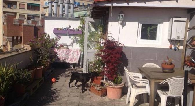 amica per 4 zampe!, dog sitter a Genova