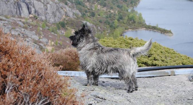 Hunden er den beste turkompis, hundepassere i Kristiansand