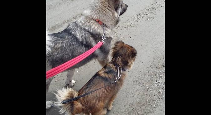 Hundrastning/passning Kopparberg, hundvakt nära Kopparberg