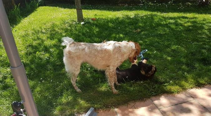 Dog Sitter sérieuse et passionnée à Metz, dog sitter à Metz