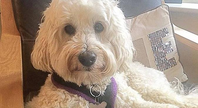 St Albans and beyond, dog sitter in St Albans