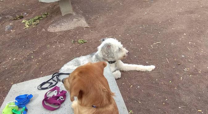 Diversión entre amigos perrunos, canguro en Las Palmas de Gran Canaria