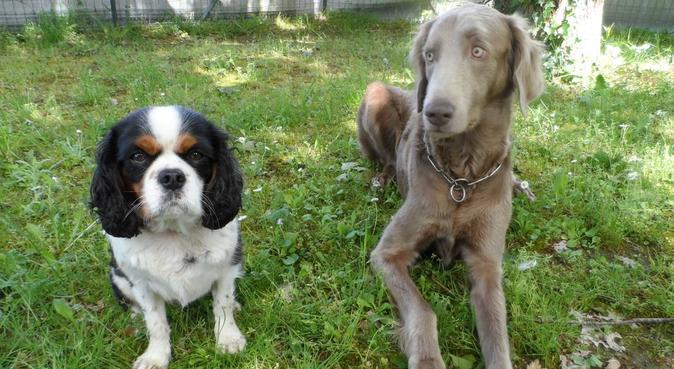 Une maison et une famille pour votre chien, dog sitter à Saint Sébastien sur Loire