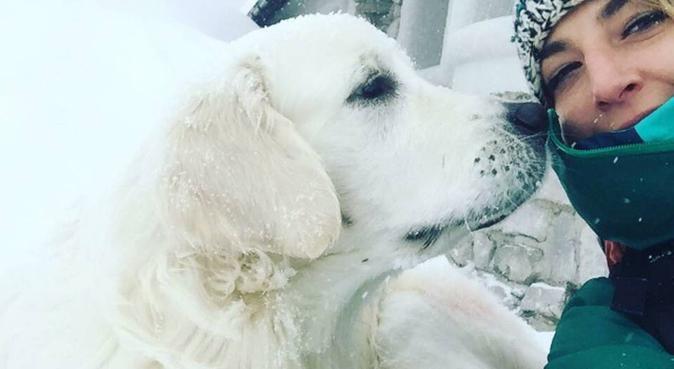 Super camminate per la serenità dei nostri amici, dog sitter a Udine