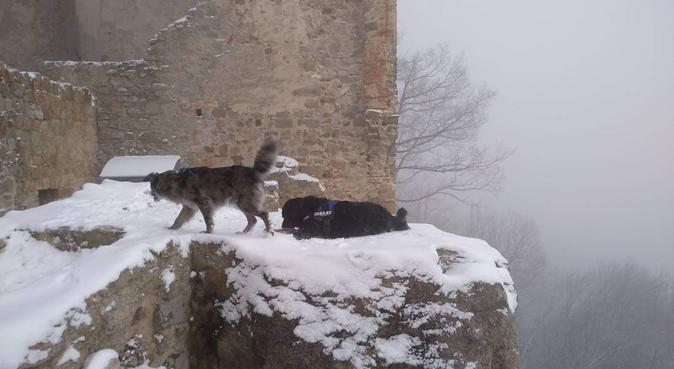 Dove i cani si sentono liberi, dog sitter a Teolo