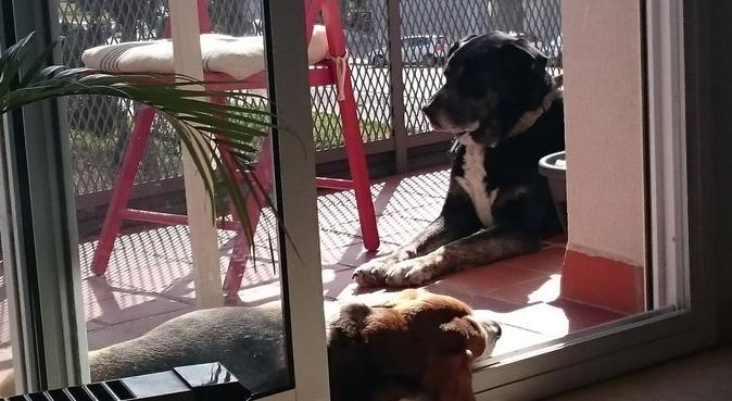 Respeto y amor a los perros., canguro en Sitges