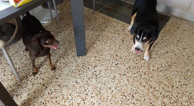 Belle passeggiate tra la natura tutti i giorni, dog sitter a Pasian di Prato