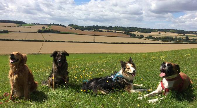 Smile Dog Walking, dog sitter in Luton