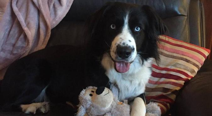 Dog lover with huge garden in Aberdeen, dog sitter in Aberdeen
