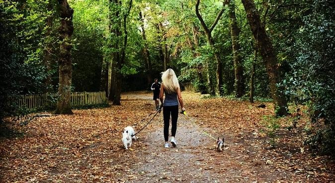 *Caring and Trustworthy* HOUSE Holland Park, dog sitter in London