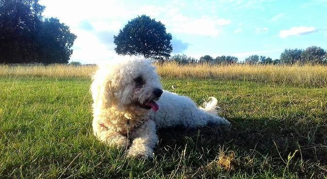 Dog care from the heart, dog sitter à London