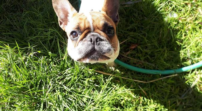 Sarà come essere in famiglia., dog sitter a Mascalucia, CT, Italia