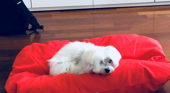 Coccole e relax a 5 stelle, dog sitter a Roma, RM, Italia