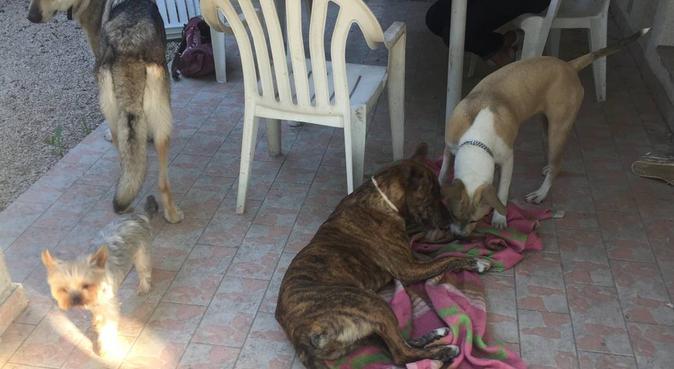 Ma passion au service de vos chiens, dog sitter à Villeneuve-lès-avignon