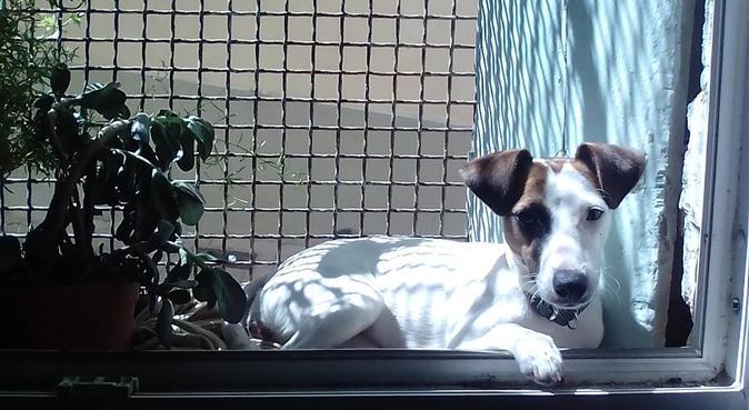 Super garderie canine à Montpellier !, dog sitter à Montpellier