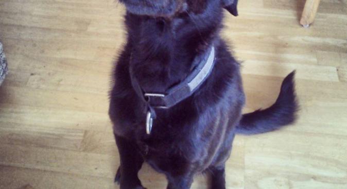 Ansvarsfull frøken trenger litt hund i livet!, hundepassere i Tønsberg, Norge