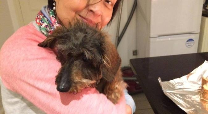 Dog Lovers Central, dog sitter in London