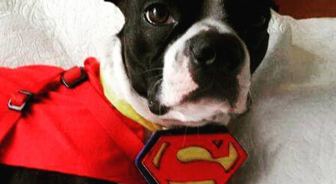 El encantador de perritos, dog sitter à Paris