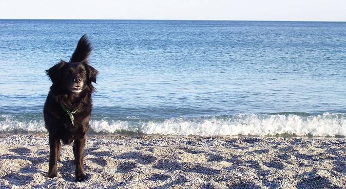 Pensione casalinga a due passi dal Valentino!, dog sitter a Torino