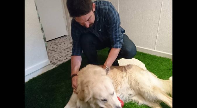 Vacances pour chien, dog sitter à Brest