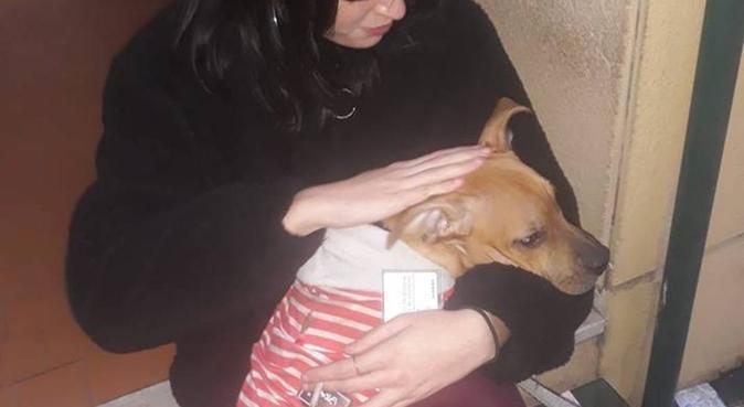 Passeggiate e coccole infinite con Gaia, dog sitter a Bologna, BO, Italia