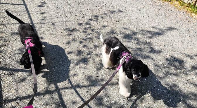Hundelufter/passer i Bergen sentrum, hundepassere i BERGEN