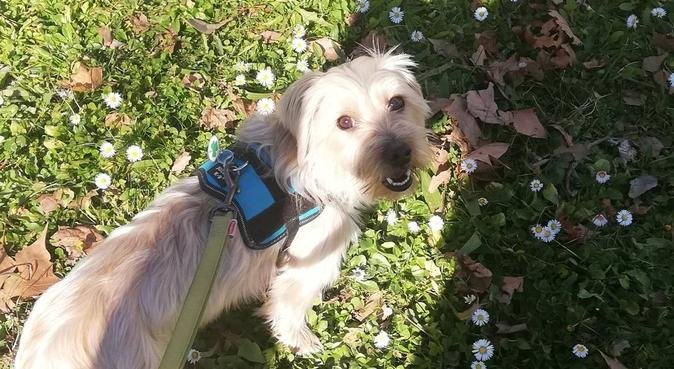 Besos y abrazos, dog sitter à Montpellier
