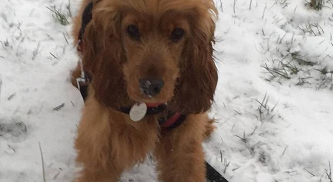 Walks and  cuddles in Fareham and  Locksheath  🐶💕, dog sitter in Locksheath