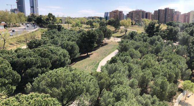 Casi una floresta encantada para perros, canguro en Madrid, España