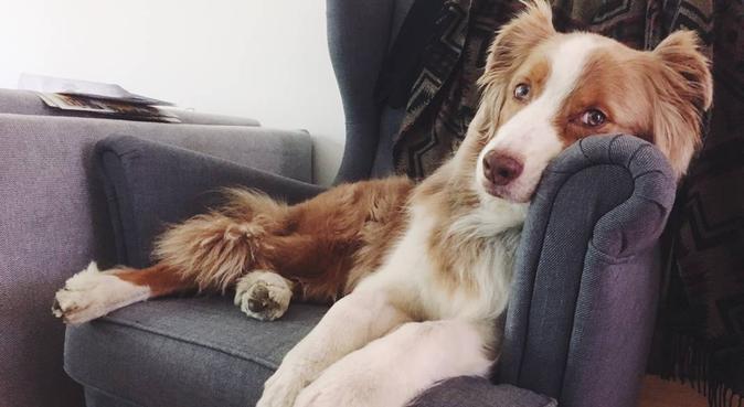 Skogspromenader och gos i soffan, hundvakt nära Göteborg
