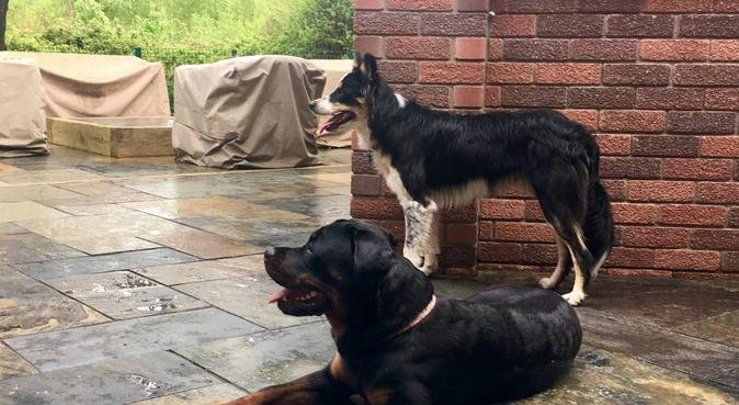 Quality care for your best friend., dog sitter in Cardiff