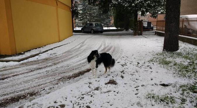 Educatrice cinofila per il vostro fido, dog sitter a Padova