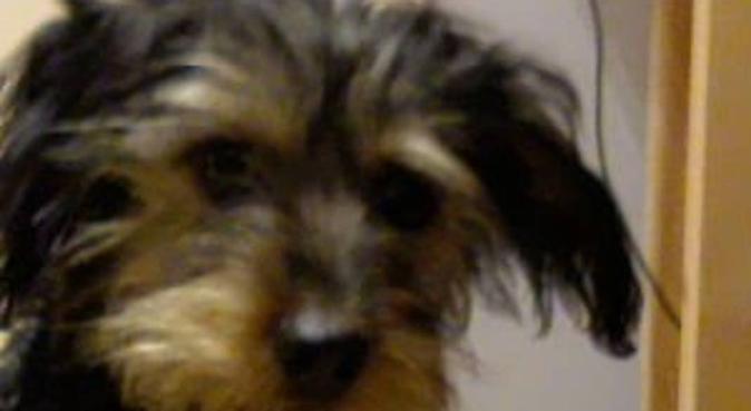 Mucky Pawz - Dog Boarding, dog sitter in Kingston