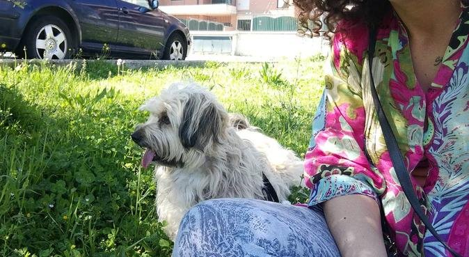 Quando i proprietari non ci sono...i cani ballano!, dog sitter a Marino