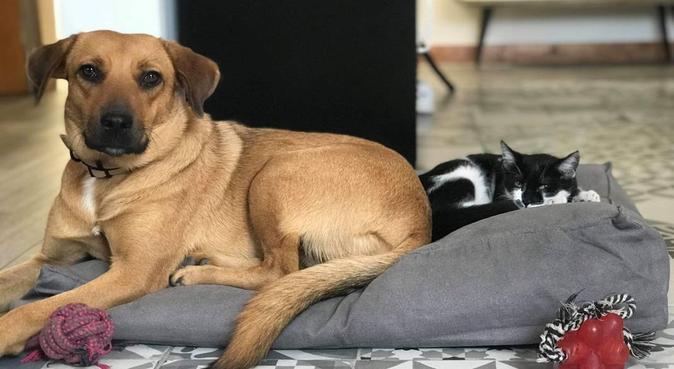 L'amour des Chiens 🐶❣️, dog sitter à Aix-en-Provence, France