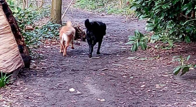Great fun walks, dog sitter in Watford