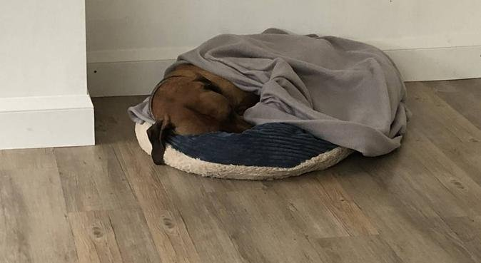 Family Friendly home to home Dog sitting - Glos, dog sitter in Gloucester, UK