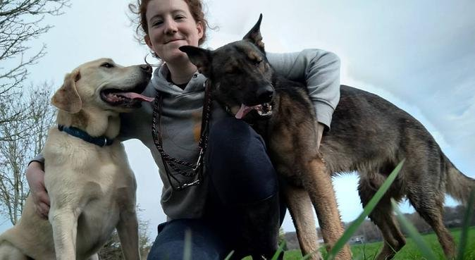 Experienced and Active Dog Lover, dog sitter in Newport