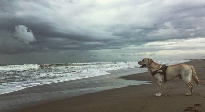 Momenti di svago, divertimento e relax, dog sitter a Lucca