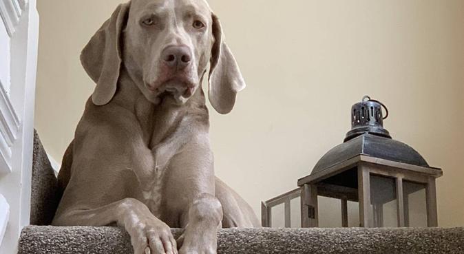 Pooch patrol, dog sitter in Bucks