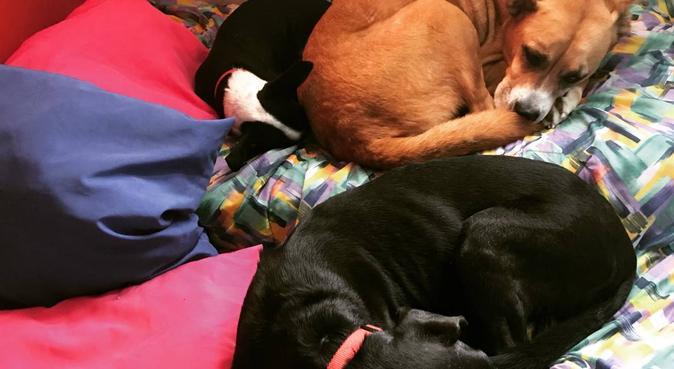 Coccole, casa e giardino a disposiziont e parco, dog sitter a Udine