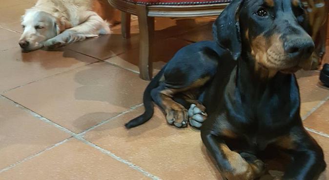 La migliore amica degli animali!, dog sitter a perugia